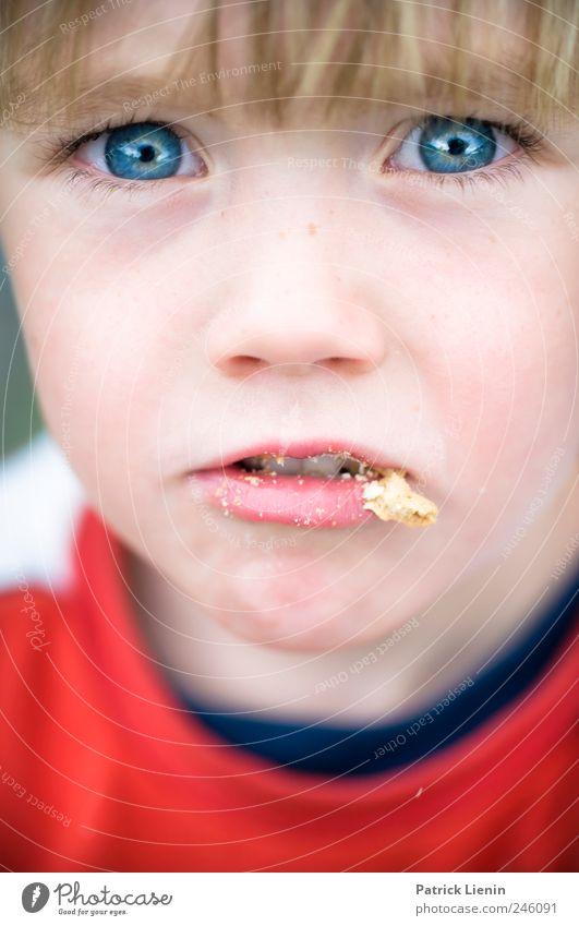Krümelmonster Mensch Kind Jugendliche schön rot Gesicht Junge Haare & Frisuren Essen träumen Kindheit natürlich Lebensmittel elegant Mund Fröhlichkeit