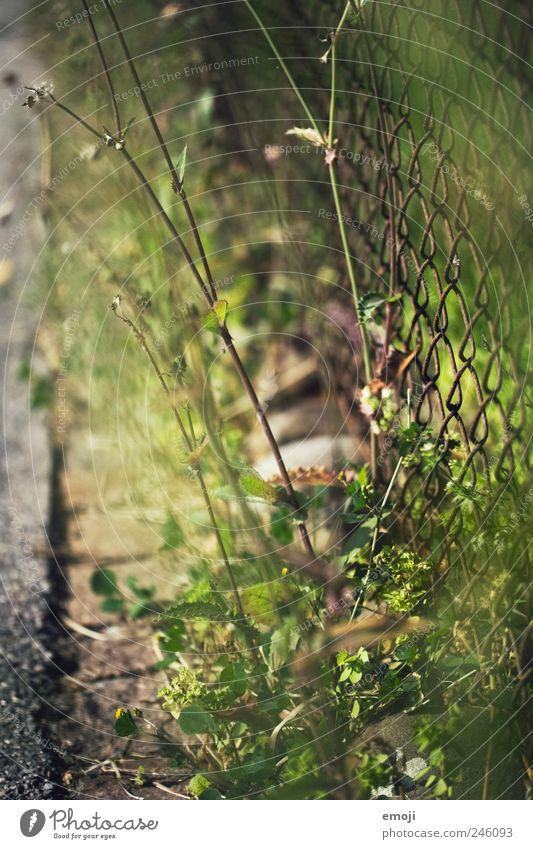 am Rande des Weges Natur Erde Schönes Wetter Pflanze Gras Grünpflanze Garten Park natürlich grün Wege & Pfade Wegrand Asphalt Maschendrahtzaun Zaun Gitternetz