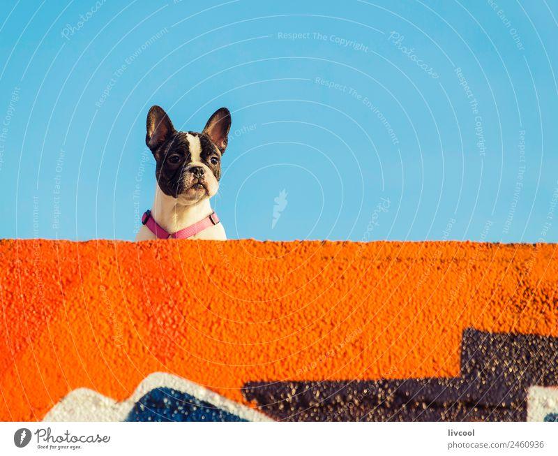 netter Hund, Anglet Erholung Sonne Strand Meer Himmel Wolken Felsen Küste Leuchtturm Tier genießen Sonnenuntergang Frankreich Baskenland euskal herria baske