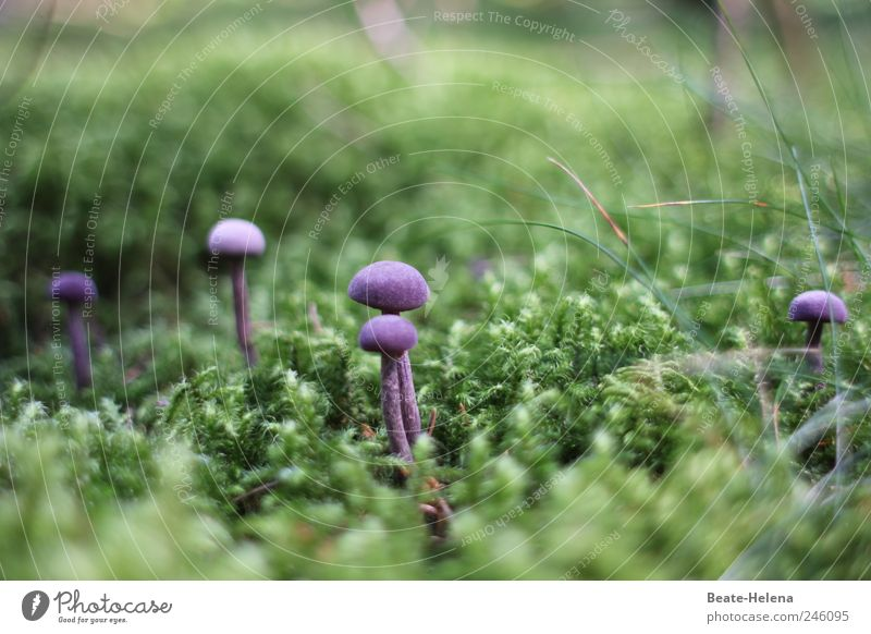Guten Appetit - das Auge isst mit! Natur grün Pflanze Freude Erholung natürlich weich berühren violett genießen Appetit & Hunger lecker Duft Pilz Moos Waldboden