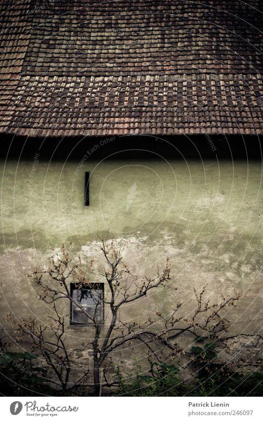 Blackened Haus Baum Dorf Menschenleer Bauwerk Gebäude Mauer Wand Fenster Dach Denkmal Stein alt eckig gruselig historisch Tod ästhetisch Einsamkeit einzigartig