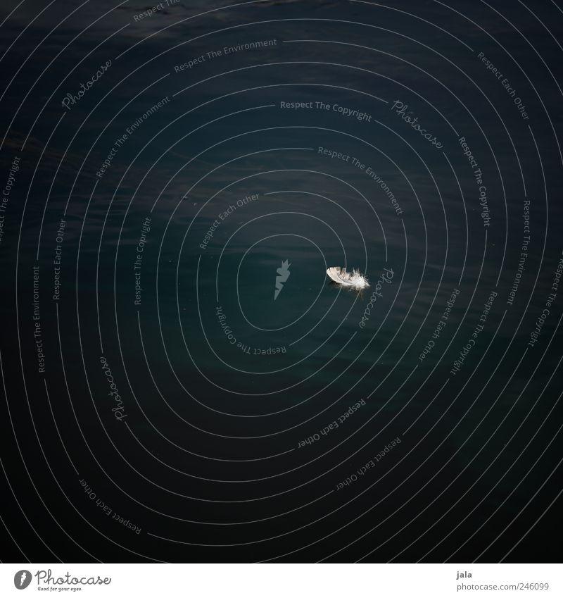 feder Natur Wasser dunkel Umwelt Wellen ästhetisch Fluss Feder