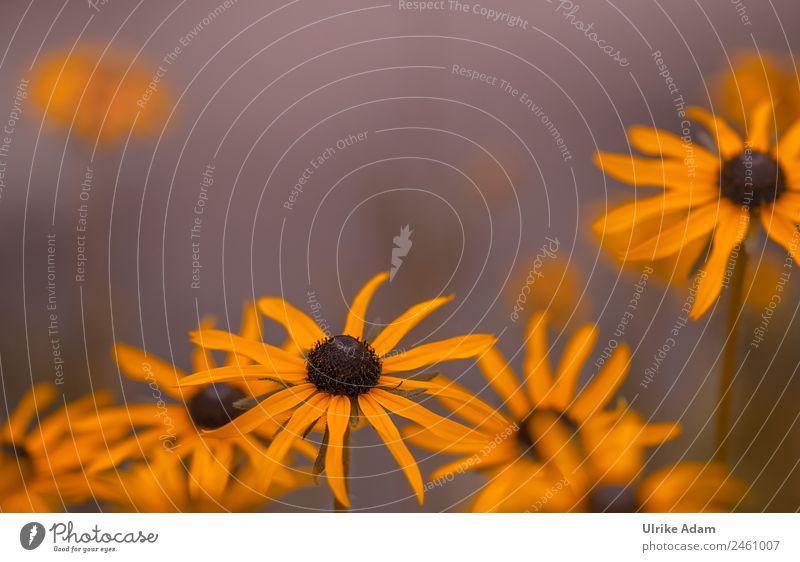 Sommerblumen Natur Pflanze Blume Erholung ruhig Freude Wärme gelb Gesundheit Herbst Blüte Garten Feste & Feiern Design Zufriedenheit