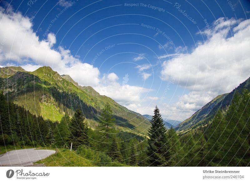 Aufatmen Umwelt Natur Landschaft Pflanze Himmel Wolken Sonnenlicht Sommer Schönes Wetter Baum Gras Sträucher Wald Hügel Felsen Alpen Berge u. Gebirge Sölkpass