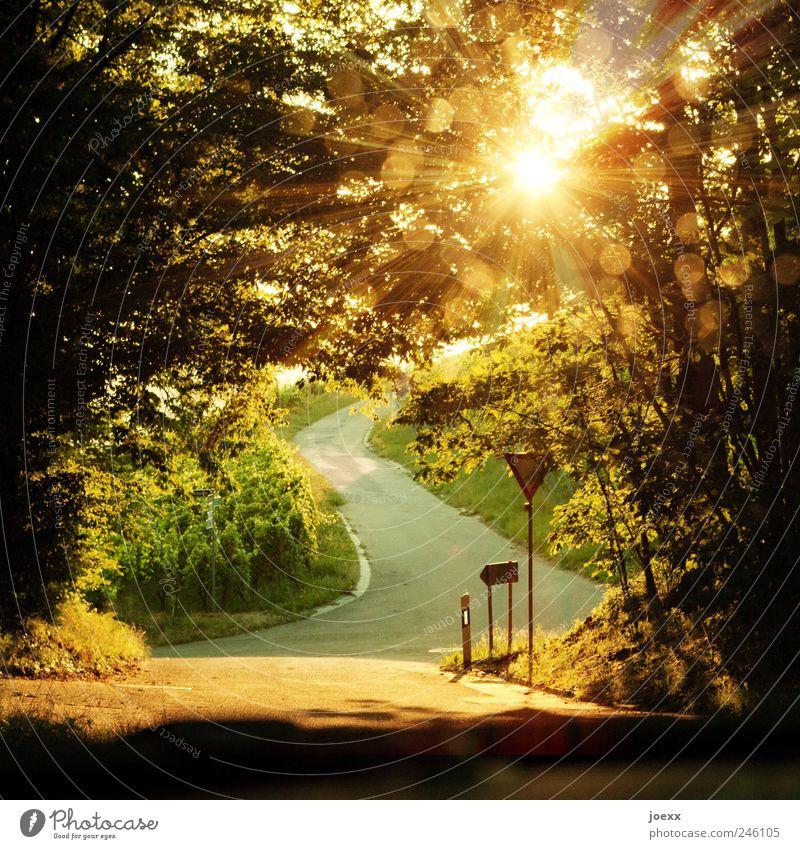 Schattenplätzchen Landschaft Sonne Sonnenlicht Sommer Schönes Wetter Baum Nutzpflanze Berge u. Gebirge Straße Straßenkreuzung Verkehrszeichen hell schön braun