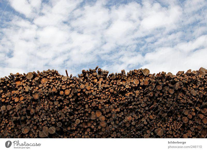 bis in den himmel Himmel Natur blau weiß Baum Wolken Umwelt Erde braun Arbeit & Erwerbstätigkeit Klima Energie Wandel & Veränderung Schönes Wetter Güterverkehr & Logistik Urwald