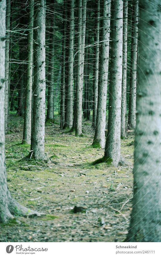 Ökosystem Umwelt Natur Landschaft Klima Pflanze Baum Gras Moos Blatt Grünpflanze Wildpflanze Wald atmen Ast Waldlichtung Zweige u. Äste Waldboden Lebensraum