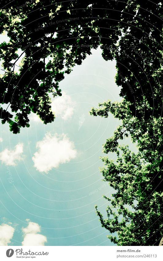 blick nach oben bäume blätterdach wolken blau grün optimismus hoffnung entspannung meditation