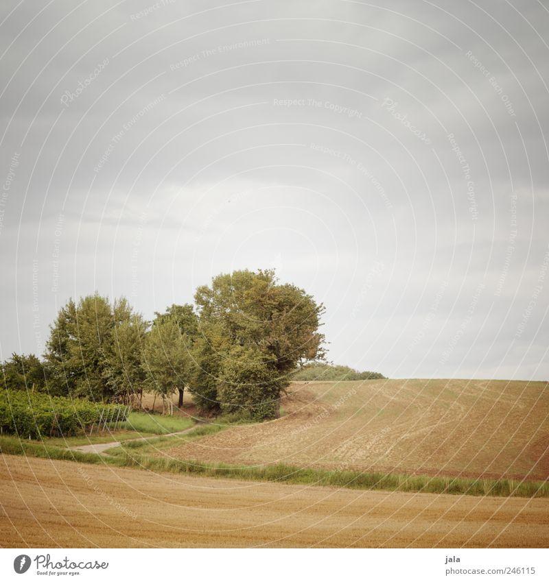 feld & flur Umwelt Natur Landschaft Pflanze Himmel Baum Gras Sträucher Grünpflanze Nutzpflanze Feld natürlich blau gold grün Farbfoto Außenaufnahme Menschenleer