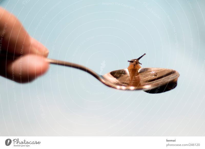 Feldaufschwung am Löffel Tier sitzen Finger Wildtier Schnecke Fühler Turnen Besteck kleben Löffel Abend Mensch Nacktschnecken haltend