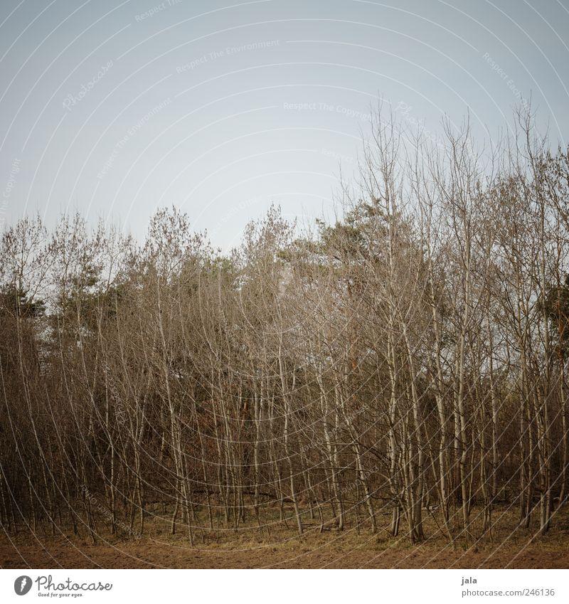 geäst Himmel Natur Baum blau Pflanze Landschaft Umwelt braun trist natürlich