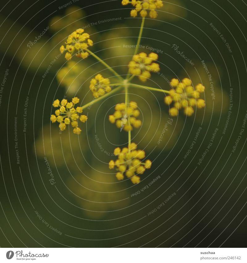 ich hab mal ... Natur Pflanze Frühling Sommer Blume Sträucher Blüte Garten Frühlingsgefühle dekorativ sanft Gewächs Stengel gelb grün Gedeckte Farben