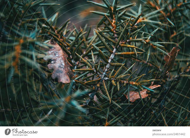 Abstrakte Formen aus den Blättern eines Strauches in der Natur Design schön Sommer Garten Umwelt Pflanze Herbst Blatt Park dunkel natürlich wild gelb grün rot