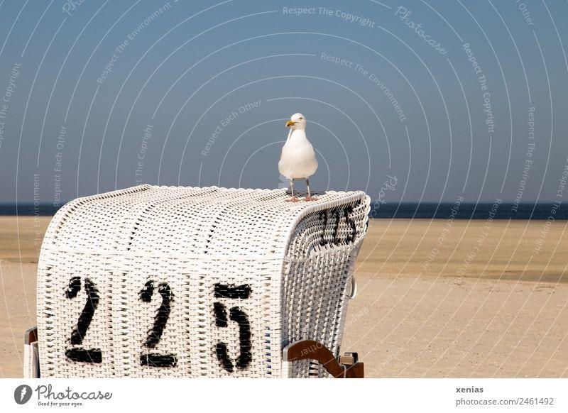 eine Möwe auf dem Strandkorb Himmel Ferien & Urlaub & Reisen Sommer blau weiß Meer Tier schwarz Vogel braun Wildtier Ziffern & Zahlen Sommerurlaub