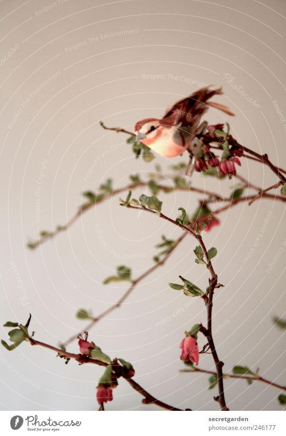 bei dir piept's wohl! Natur weiß Pflanze rot Einsamkeit Tier Frühling klein Kunst braun Zufriedenheit Vogel Wohnung ästhetisch Sträucher Häusliches Leben