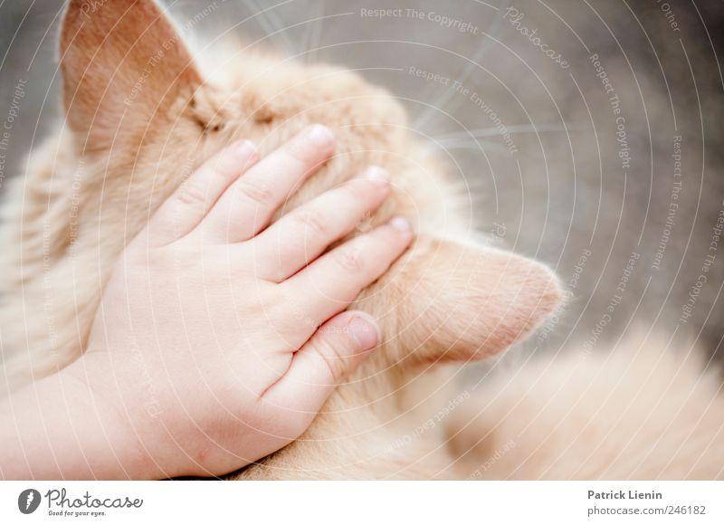 Lovecats Mensch Kind Hand Katze schön Tier Wärme Freundschaft Kindheit elegant Finger Sicherheit einzigartig weich Wunsch Team