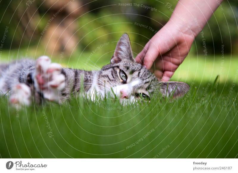 Ich muss mal etwas relaxen... Katze Natur Hand grün schön Sommer Tier Einsamkeit ruhig Erholung Landschaft Wiese Gras Frühling Garten Park