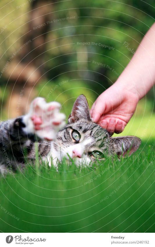Stör mich nicht! Kind Natur Hand ruhig Tier Erholung Katze Gras Garten Park Fuß liegen Finger Ohr Tiergesicht Fell