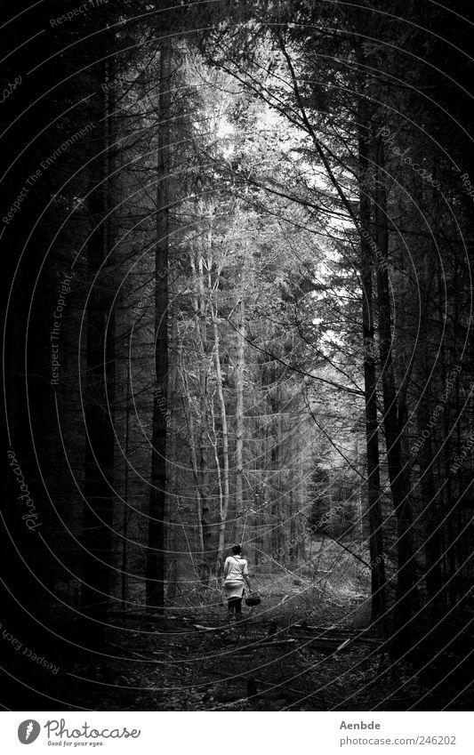Pilze sammeln Mensch Natur Ferien & Urlaub & Reisen dunkel Wald Umwelt Freizeit & Hobby wandern gruselig Sammlung Korb
