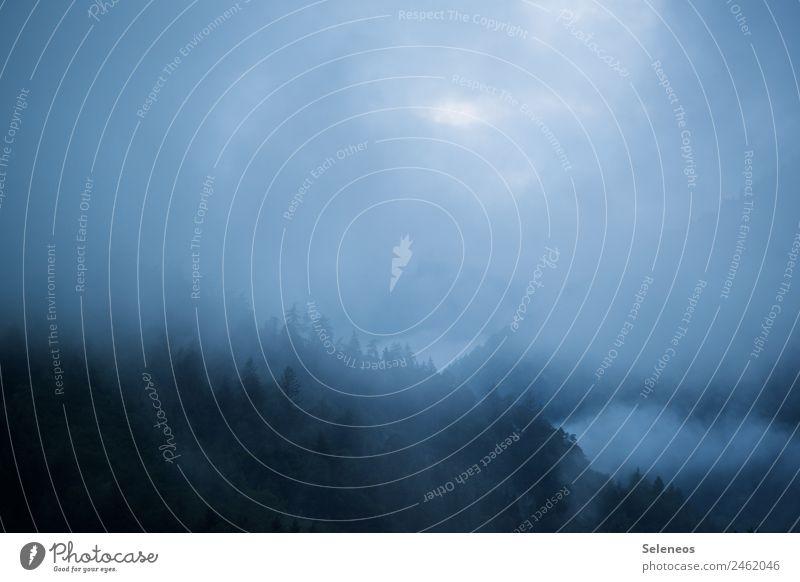 Frühnebel Ausflug Ferne Freiheit Berge u. Gebirge wandern Umwelt Natur Landschaft Wolken Sonnenaufgang Sonnenuntergang Wetter Nebel Alpen natürlich Farbfoto