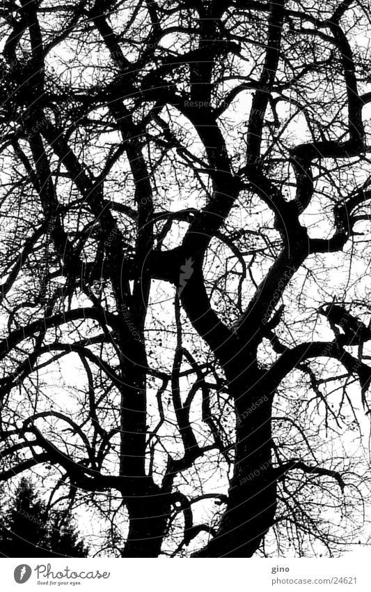 tree net Baum Herbst verzweigt Schwarzweißfoto Ast Natur