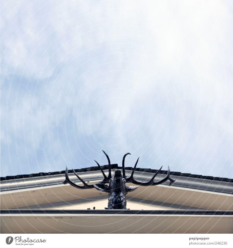 Giebel 10-Ender Himmel Sommer Haus Tier Wand Tod Mauer Fassade Dach Tiergesicht Wildtier Jagd hängen Schönes Wetter Hirsche Dachrinne