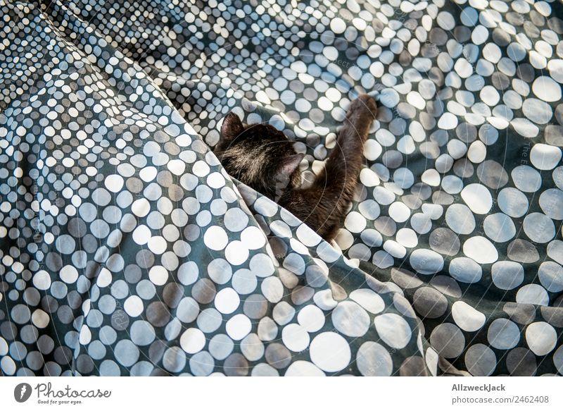 Schwarze Katze liegt im Bett Erholung ruhig schwarz Pause schlafen Bettwäsche Punkt Haustier Hauskatze Decke gemütlich gepunktet ausruhend Bettdecke