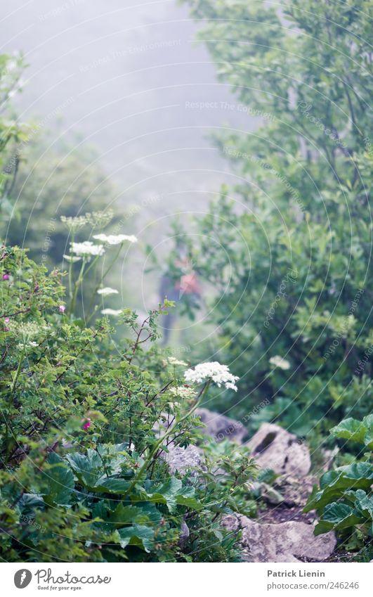 Mittelerde Natur Baum grün Pflanze Blume Einsamkeit Berge u. Gebirge Landschaft grau Umwelt Wege & Pfade Stein Stimmung Wetter Wind nass