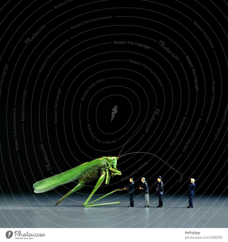 private equity Mensch Natur Mann Tier Erwachsene sprechen Business Arbeit & Erwerbstätigkeit maskulin Industrie Team Geldinstitut Sitzung Insekt Anzug