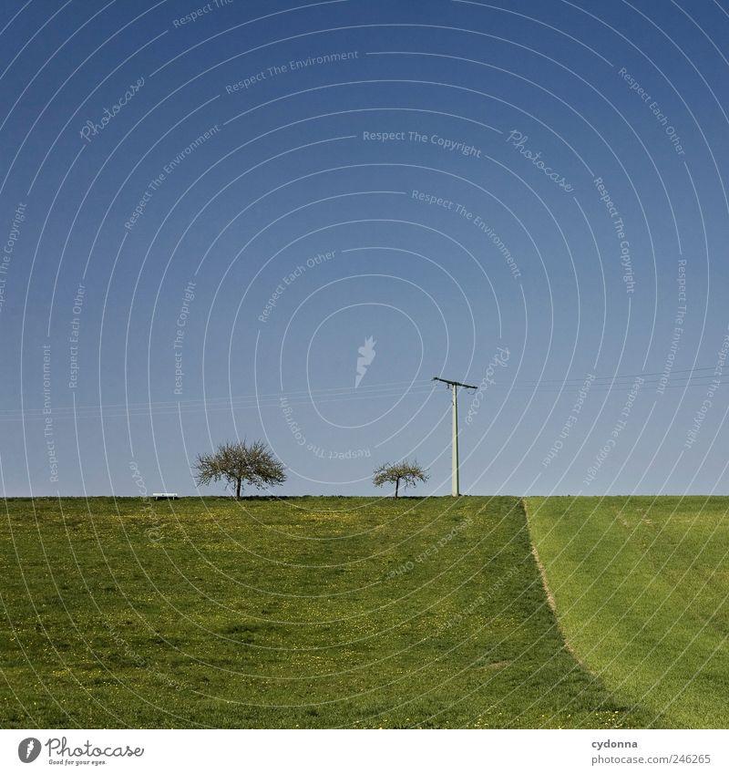 Klare Verhältnisse Natur schön Sommer Baum Erholung Einsamkeit Landschaft ruhig Ferne Umwelt Leben Frühling Wiese Wege & Pfade Freiheit Horizont