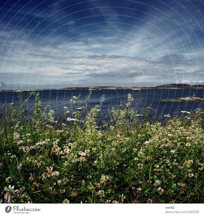 Grünstreifen Ferien & Urlaub & Reisen Tourismus Ferne Freiheit Umwelt Natur Landschaft Pflanze Himmel Wolken Horizont Klima Schönes Wetter Sträucher Küste Meer