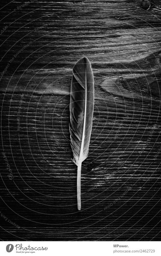 natürliche strukturen Natur ästhetisch Feder Holz Strukturen & Formen Oberflächenstruktur Schreibfeder Schwarzweißfoto Nahaufnahme