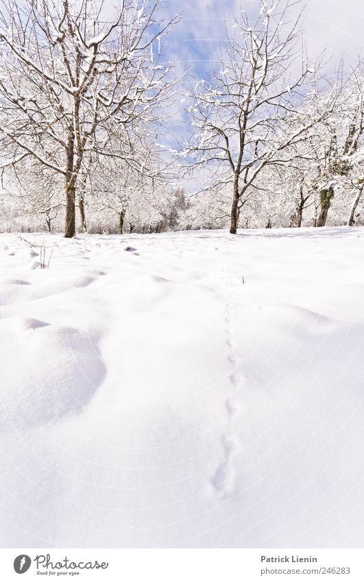 Wann wird es mal endlich... Natur Ferien & Urlaub & Reisen Pflanze weiß Baum Landschaft ruhig Winter kalt Umwelt Wiese Schnee Freiheit hell Freizeit & Hobby