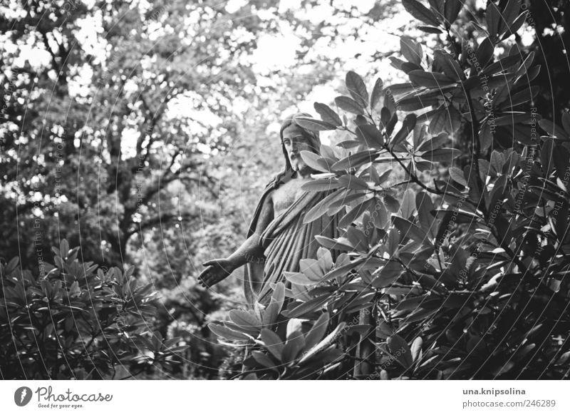In der Ruhe liegt die Würze Mensch Mann Pflanze Umwelt Garten Erwachsene Religion & Glaube stehen Sträucher Skulptur heilig Friedhof Grabstein Segnung Heiligenfigur