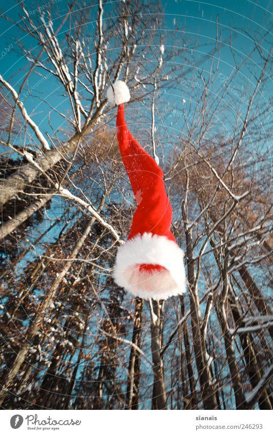 Ho! Ho! Ho! Himmel Natur Weihnachten & Advent blau Pflanze rot Wald kalt Umwelt Luft Wind fliegen Fröhlichkeit fallen Weihnachtsmann