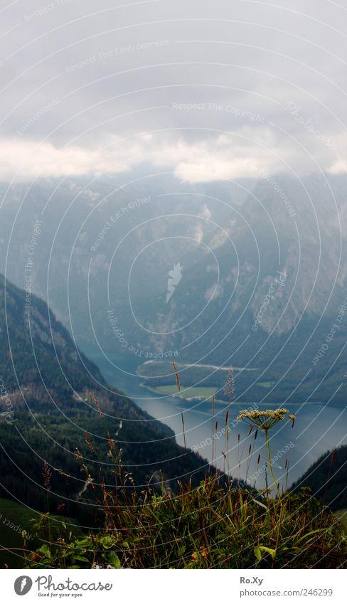 Ausblick vom Jenner auf den Königssee Himmel Natur Pflanze Sommer Ferien & Urlaub & Reisen Wolken Erholung Berge u. Gebirge Gras Landschaft See wandern Nebel