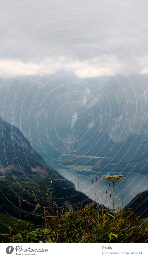Ausblick vom Jenner auf den Königssee Ferien & Urlaub & Reisen Tourismus Ausflug Sommer Sommerurlaub Natur Landschaft Himmel Wolken Gewitterwolken Pflanze Gras