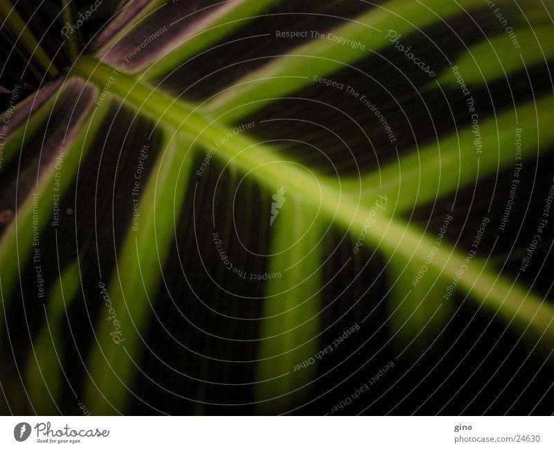 blatt1 Licht Blatt Pflanze Nacht Sonne Natur