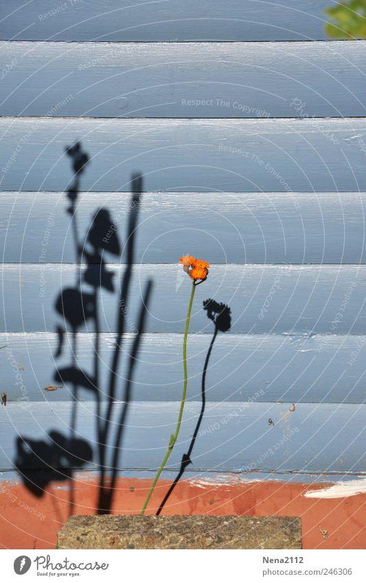 Irgendwo in Hamburg ;-) Ausflug Freiheit Garten Umwelt Natur Pflanze Sommer Wetter Schönes Wetter Blume Blatt Blüte Nutzpflanze Wildpflanze Topfpflanze Wachstum