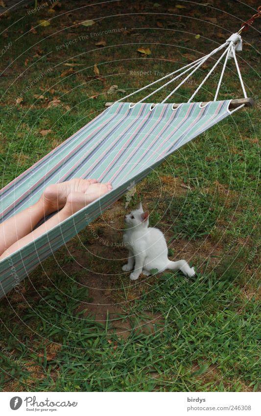 Auf den richtigen Moment warten... Katze Mensch Sommer Tier Erholung Garten Beine Fuß liegen sitzen außergewöhnlich Neugier Haustier frech gestreift Erwartung