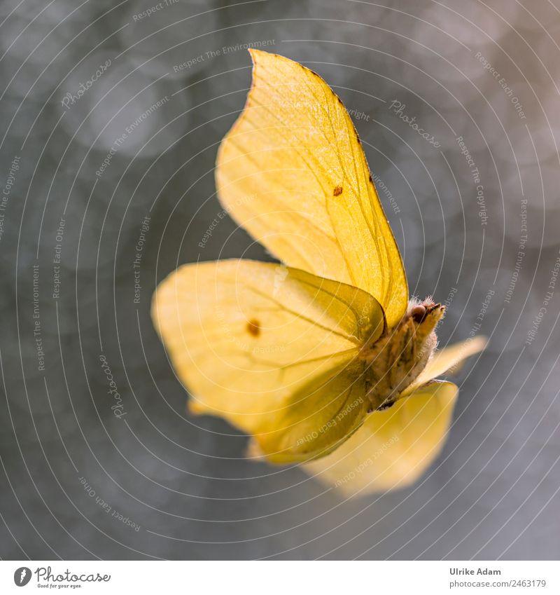 Zitronenfalter - Natur und Schmetterlinge Design Dekoration & Verzierung Taufe Tier Frühling Sommer Herbst Wildtier Flügel Insekt 1 fliegen glänzend leuchten