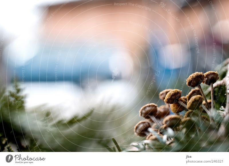 kälteresistent II Natur Pflanze Tannennadel alt warten authentisch kalt nah Originalität rund stachelig stark trashig trist trocken Gelassenheit Idylle
