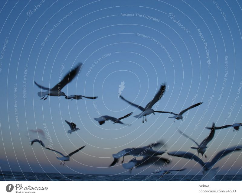 am Himmel blau Bewegung Vogel fliegen Horizont Ostsee Möwe