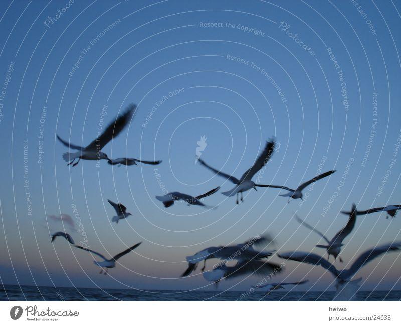 am Himmel Möwe Vogel Horizont Ostsee blau Bewegung fliegen im Flug Vogelflug
