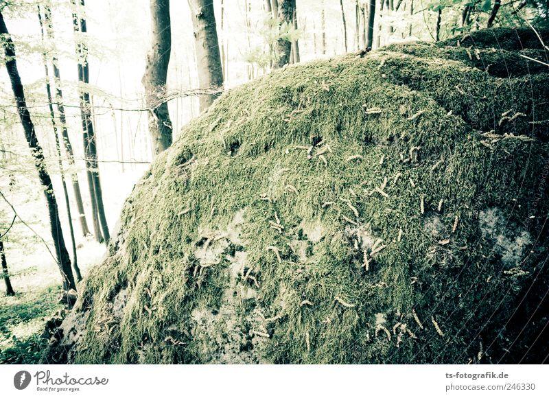 Der Wald-Blob Umwelt Natur Landschaft Pflanze Erde Sommer Baum Gras Moos Blatt Hügel Felsen Berge u. Gebirge kalt grün Moosbewuchs bewachsen Flechten