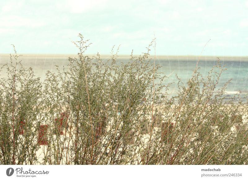 Ehrlich muss fühlen. Natur Pflanze Sommer Strand Meer Ferne Erholung Umwelt Landschaft Küste Zufriedenheit Horizont Ausflug ästhetisch Idylle Stranddüne