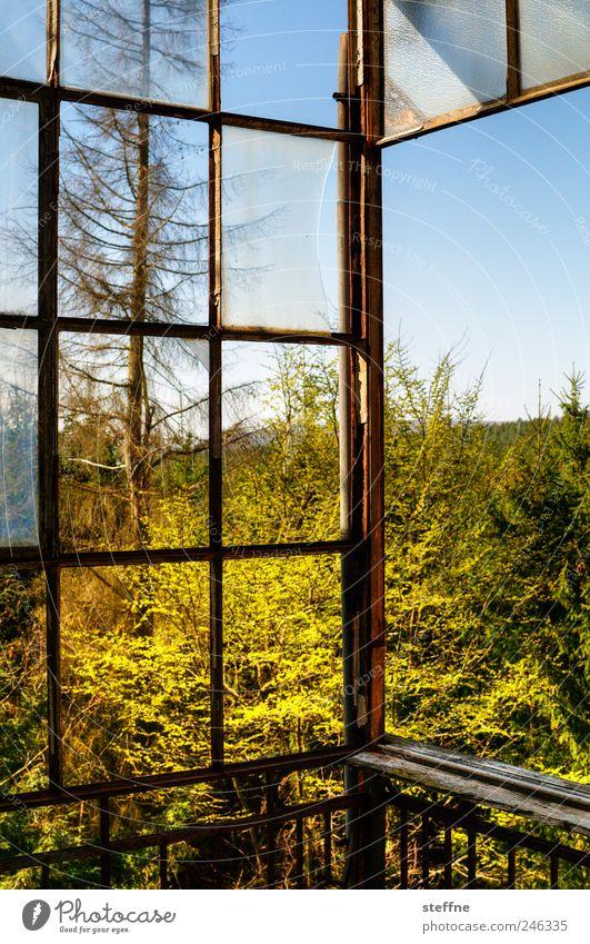 Balkon, ohne Kiste, ohne Mann Natur Baum Wald Frühling Umwelt frisch natürlich Terrasse Schönes Wetter Wolkenloser Himmel