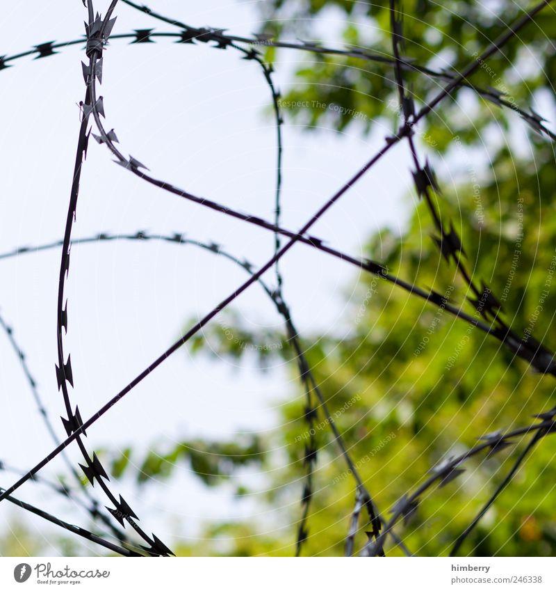 naturschutz Natur Baum Pflanze Sommer Umwelt kalt Kunst Klima Design bedrohlich Ende geheimnisvoll Zaun Krieg Barriere Aggression