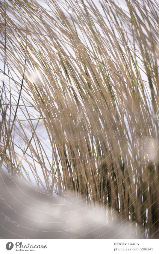 such great heights | Spiekeroog Natur Ferien & Urlaub & Reisen Pflanze Meer Strand Blatt Umwelt Landschaft Freiheit Gras Sand Küste Wetter Freizeit & Hobby Klima liegen