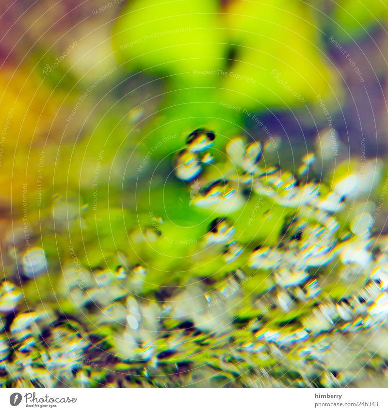 bio diesel Lifestyle Kunst Printmedien Umwelt Natur Pflanze Wasser Wassertropfen Grünpflanze exotisch Design Kitsch skurril Aquarium Aquarell aquatisch